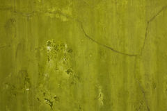 Mur olive Images libres de droits