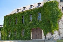 Mur plaqué de lierre de château d'Anvers Images libres de droits