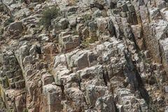 Mur rocheux avec le vautour moine Estr?madure, Espagne images libres de droits