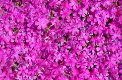 Mur rosâtre Photographie stock libre de droits