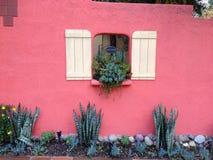 Mur rose de stuc avec des succulents Photos libres de droits