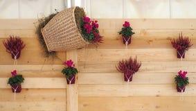 Mur rustique en bois décoré des fleurs violettes mises en pot et dans un panier en osier Photographie stock