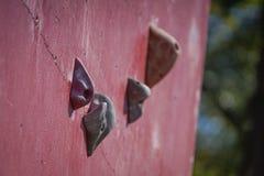 Mur s'élevant artificiel rouge avec des prises image stock