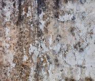 Mur sombre avec le moule photographie stock