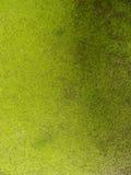 Mur utilisé modifié grunge vert Photographie stock libre de droits