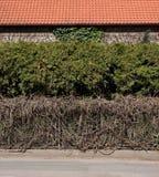 Mur vert Images libres de droits