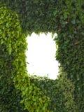 Mur vert abstrait de feuillage ou de feuilles et fenêtre d'isolement blanche, l'espace de copie photo libre de droits