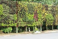 Mur vert avec des plantes et des fleurs Image stock