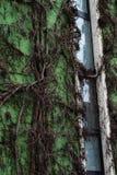 Mur vert d'appartement photos stock