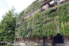 Mur vert dans un bâtiment écologique Images libres de droits