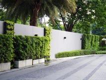 Mur vert de buissons Images stock