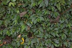 Mur vert naturel Photos libres de droits