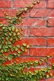 Mura di mattoni Fotografia Stock Libera da Diritti
