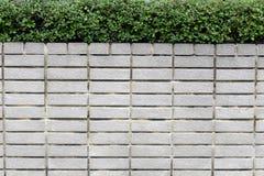 Mura di mattoni ed alberi verdi Fotografia Stock Libera da Diritti