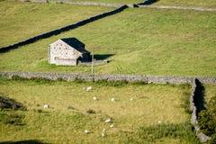 Mura a secchi e granai - vallate di Yorkshire, Inghilterra, Fotografia Stock