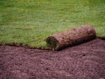 Murawy trawy rolka obraz royalty free