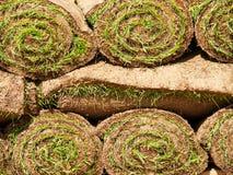 Murawy trawy rolki Obraz Royalty Free