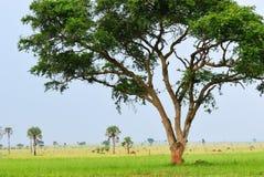 Murchison Falls national park, Uganda Royalty Free Stock Image