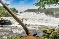 Murchison falls on the Victoria Nile river,Uganda. Murchison falls on the Victoria Nile river, Uganda Royalty Free Stock Photos