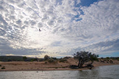 Murchison River: Kalbarri, Western Australia royalty free stock photos