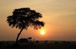 Murchison valt Nationaal Park Royalty-vrije Stock Fotografie
