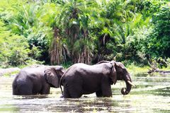 Murchison valt nationaal park, Oeganda royalty-vrije stock afbeeldingen
