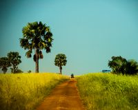 Murchison valt nationaal park, Oeganda royalty-vrije stock fotografie