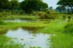 Murchison valt nationaal park, Oeganda stock foto's