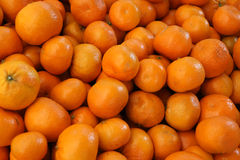 Murcott tangerine, Citrus reticulata Stock Photos