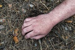 Murder in the woods. The hand of a dead man in the forest needles. Violent attack. Victim of crime