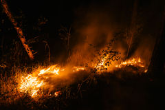 Murderous beautiful wildfire Stock Images