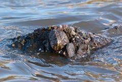 MureÈ™ rzeka zdjęcia stock