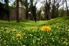 Muren en park met gele bloemen in Neuebrandemburg Royalty-vrije Stock Afbeelding