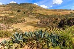 Murena okręgi, round kształtny historyczny Incan agriciltural miejsce dalej Zdjęcia Royalty Free