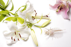 Murex and lily flowers Stock Photography