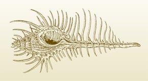 Murex pecten del murex del pettine di Venere nella vista di profilo su un fondo bruno-giallastro di pendenza royalty illustrazione gratis