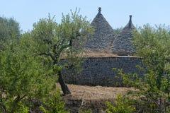 Murge (Apulia) - Trulli and olive trees. Murge (Puglia, italy) - Trulli and olive trees royalty free stock images