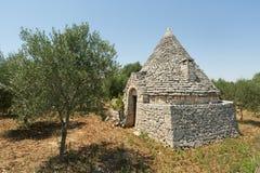 Murge (Apulia) - Trullo en olijfbomen royalty-vrije stock foto's