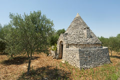 Murge (Apulia) - Trullo and olive trees Royalty Free Stock Photos