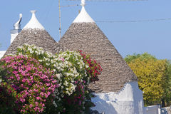 Murge (Puglia, italy) - Trulli and flowers Royalty Free Stock Photo