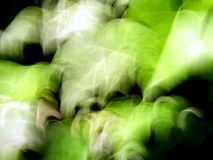 murgröna Arkivfoton