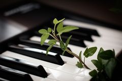 Murgröna och piano Arkivbild