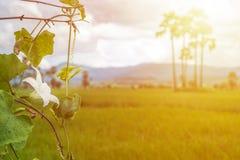 Murgröna och vit blomma Royaltyfri Fotografi
