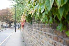 Murgröna på en vägg av en gata Fotografering för Bildbyråer