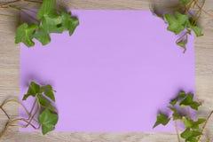 Murgröna på färgpapper Arkivfoto