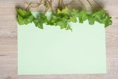 Murgröna på färgpapper Fotografering för Bildbyråer