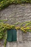 Murgröna på fasaden av ett hus Arkivbild