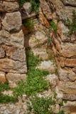 murgröna 8906 på forntida moment Royaltyfri Bild