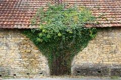 Murgröna på gammal bulding i form av treen Arkivfoto