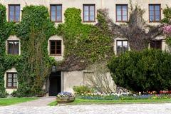 Murgröna täckt slottvägg Arkivfoton